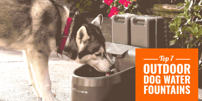Best Outdoor Dog Water Fountains