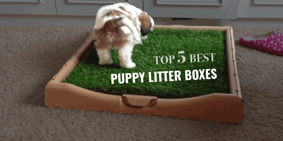 Top 5 Best Puppy Litter Boxes Grass Boxes Pee Pads Amp More
