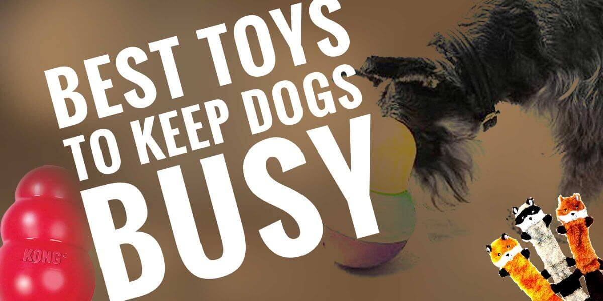 10 Best Toys to Keep Dogs Busy — 2019 — Balls, Smart Toys