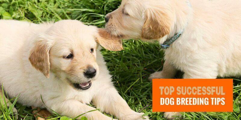 successful dog breeding tips