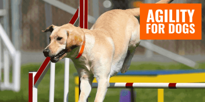 Agility Training Equipment for Dogs — Gears, Training, Reviews