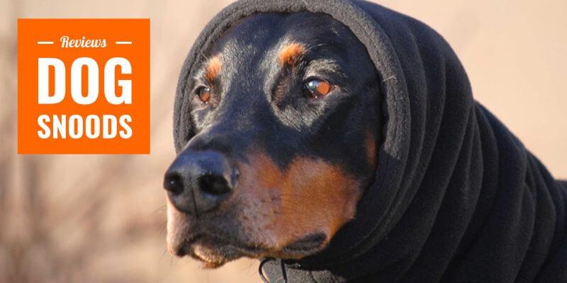 best dog snoods