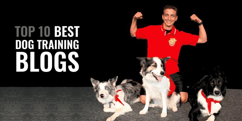Top 10 Best Dog Training Blogs