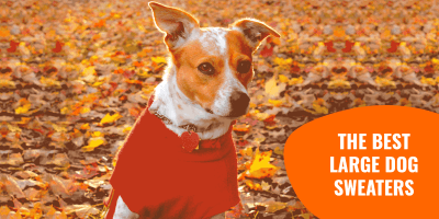10 Best Large Dog Sweaters for Big Dogs in Winter