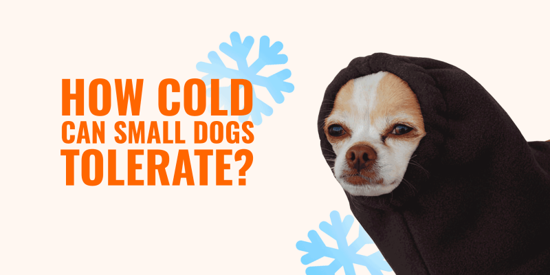 how cold small dogs tolerate