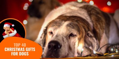 Top 40 Best Christmas Gifts for Dogs