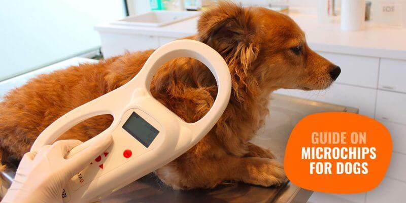 dog microchip scanning