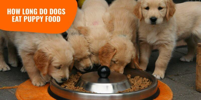 puppies eating puppy food