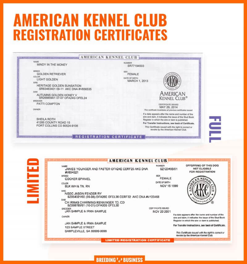 full AKC certificate and a limited AKC certificate