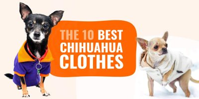 Best Chihuahua Clothes