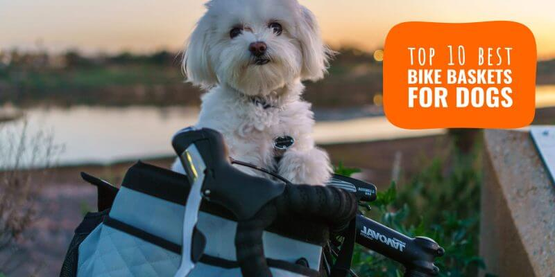 Top 8 Best Dog Bike Baskets – Our Review of Bicycle Carriers