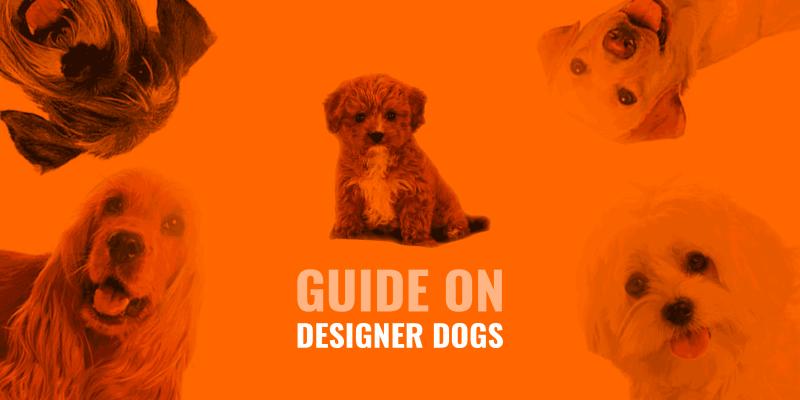 designer dog guide