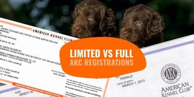 Limited AKC Registration vs Full AKC Registration