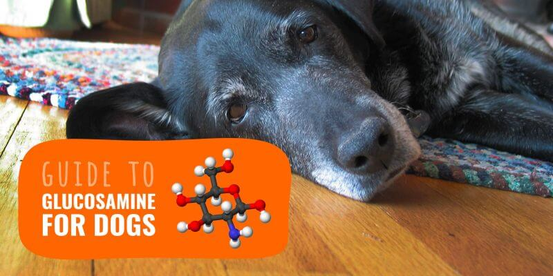 Glucosamine for Dogs – Benefits, Side Effects, FAQ & Reviews