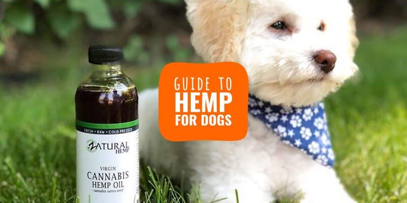 hemp for dogs (guide)