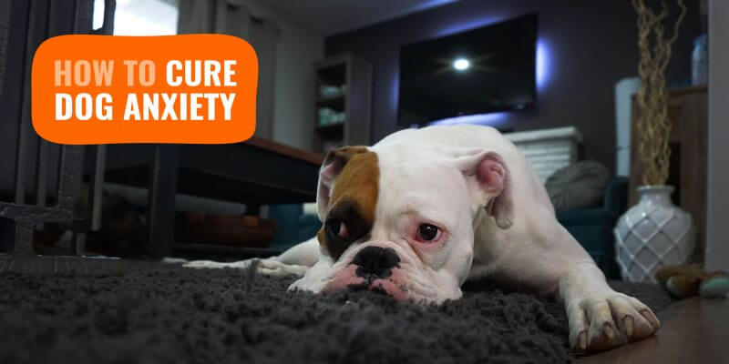 Dog Anxiety – Signs, Causes, Treatments & Anxiety Relief Reviews