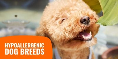 Hypoallergenic Dogs – Breeds, Allergens & Allergy-Free Dogs