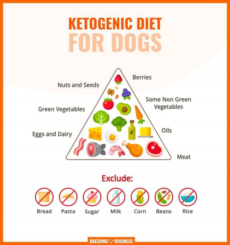 keto-friendly foods for dogs