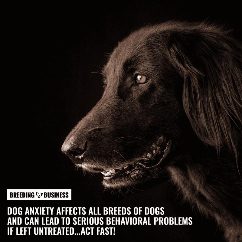 treating dog anxiety
