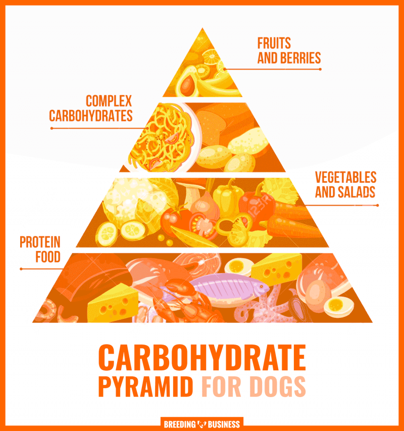 carbs for dogs (pyramid)