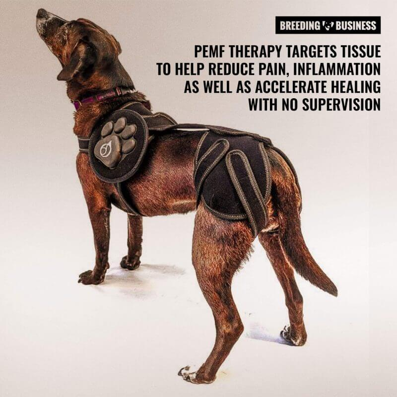 Magnetic Therapy for Dogs – Review, Procedure, Price, Pros