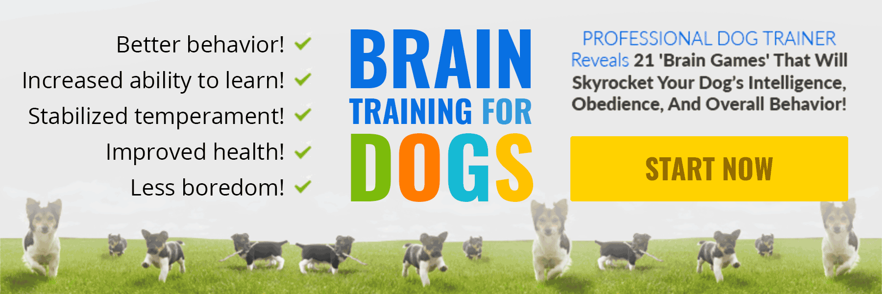 dog brain training