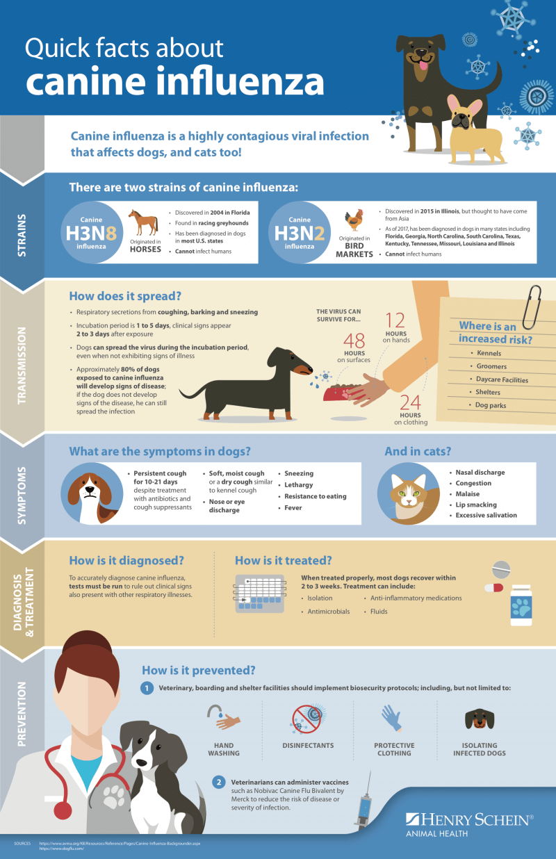 dog flu guide