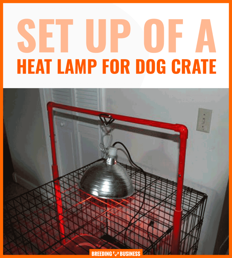 kennel heat lamp
