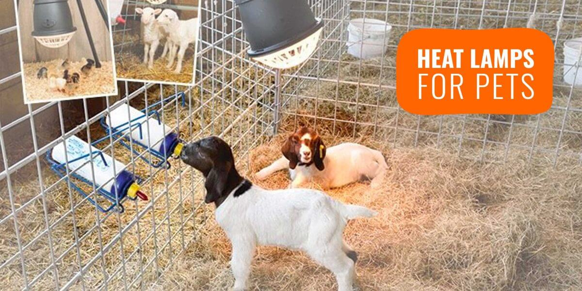 Heat Lamps For Dogs Buying Guide Reviews Faq