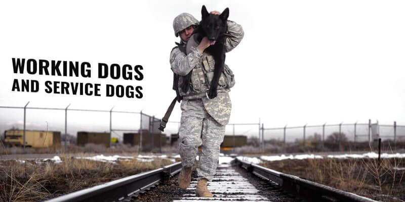 Working Dogs and Service Dogs – Different Types, Training & Breeds
