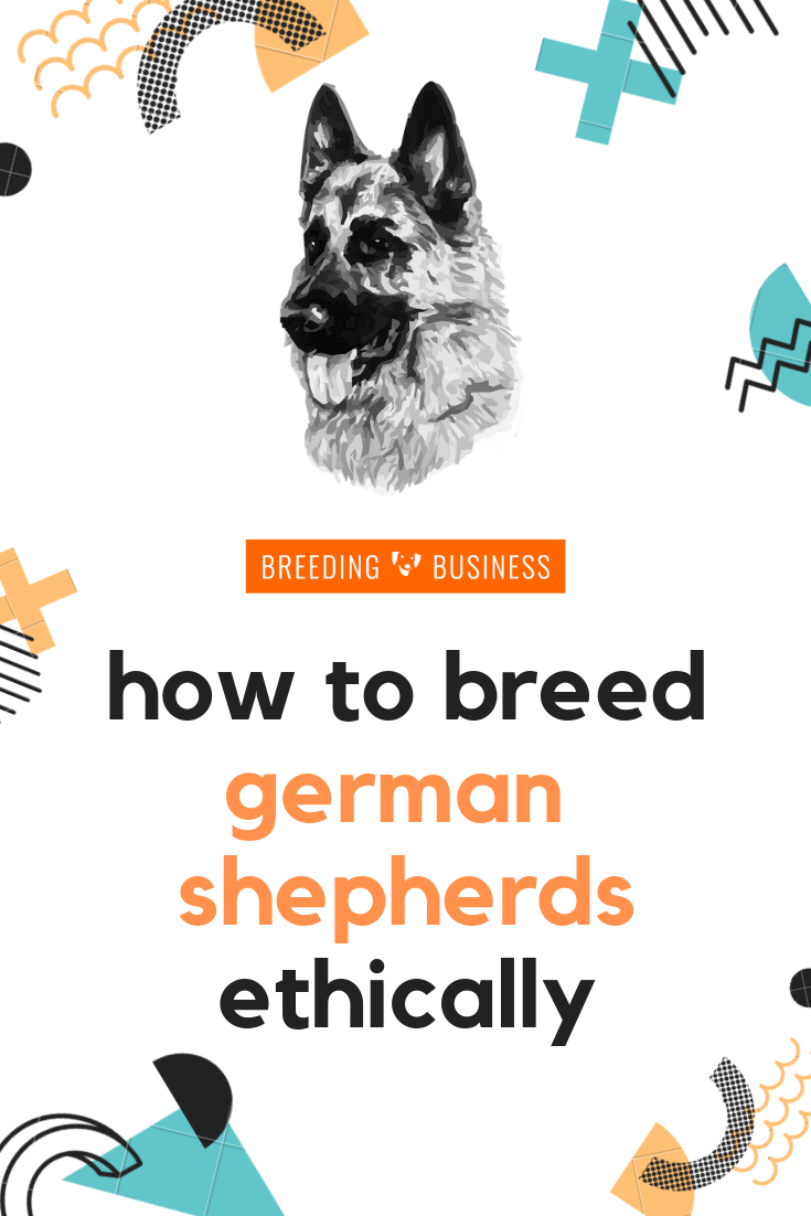 how to breed german shepherds ethically