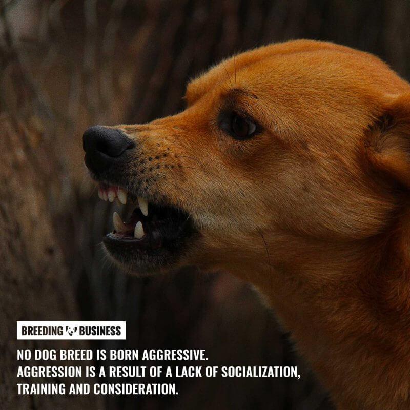 dog aggressiveness