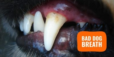 bad dog breath (canine halitosis)