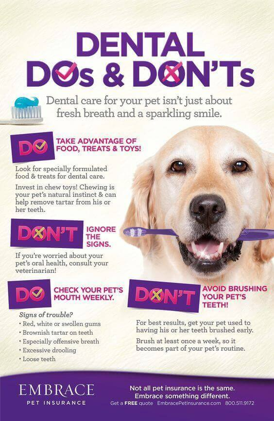 dog dental care (infographic)
