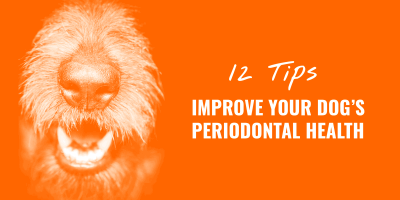 Improve Dog Periodontal Health