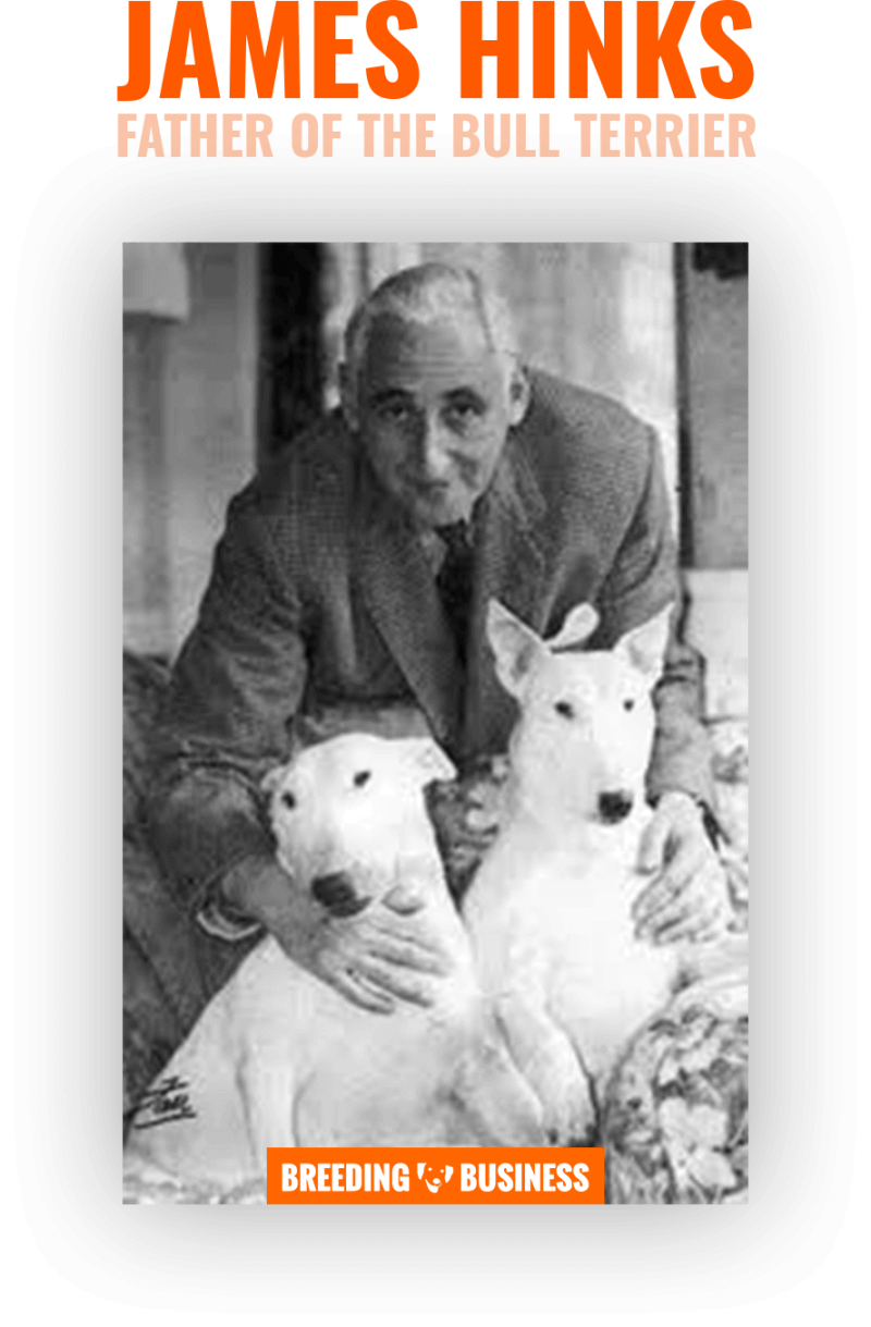 James Hinks, the father of the breed, with two of his Bull Terriers