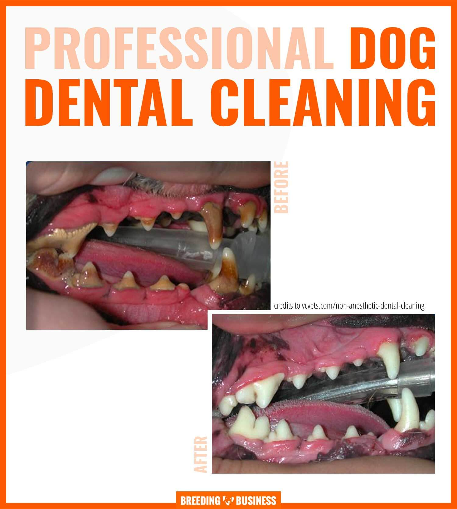 professional dental cleaning for dogs