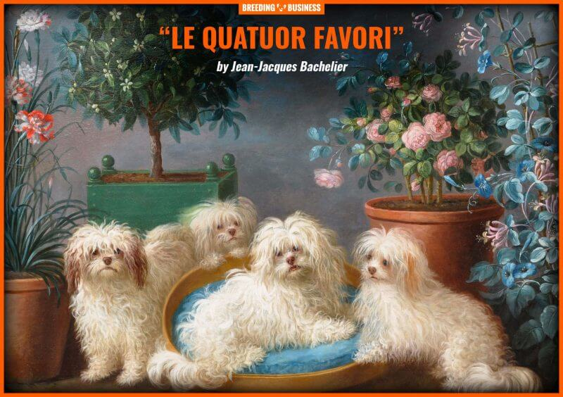 An oil on canvas featuring four Havanese dogs (by Jean Jacques Bachelier, circa 1724 to 1806)