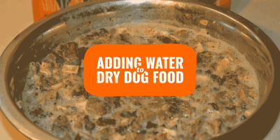 Add Water to Dry Dog Food