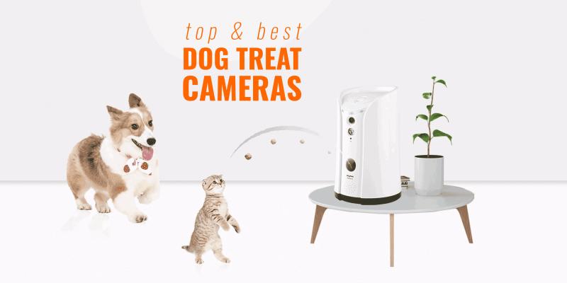 5 Best Dog Treat Cameras – Petzi, Petcube, Skymee, Furbo & Pawbo