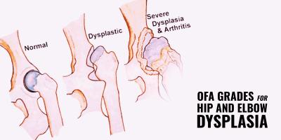 OFA Grades for Hip & Elbow Dysplasia