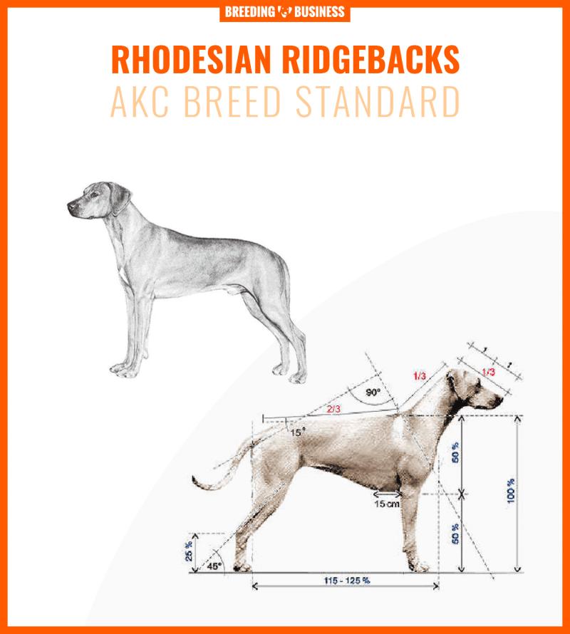 Rhodesian Ridgeback breed standard
