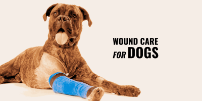 wound care for dogs