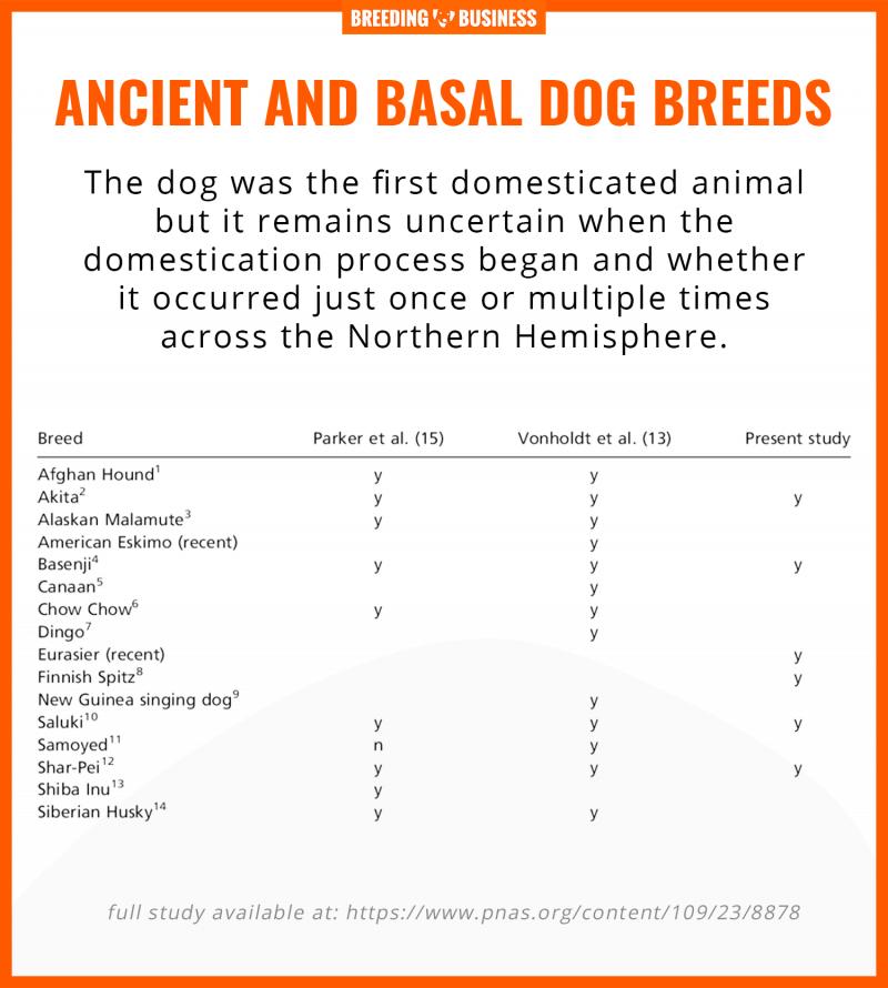 basal ancient dog breeds