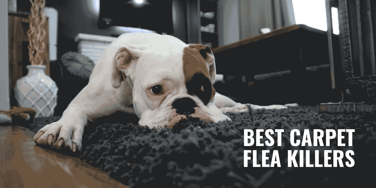 10 Best Carpet Flea Killers Reviews Toxicity Amp Benefits