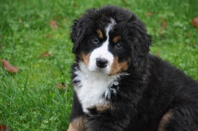 500+ Big Dog Names – List of Names for Large Puppies & Dogs!
