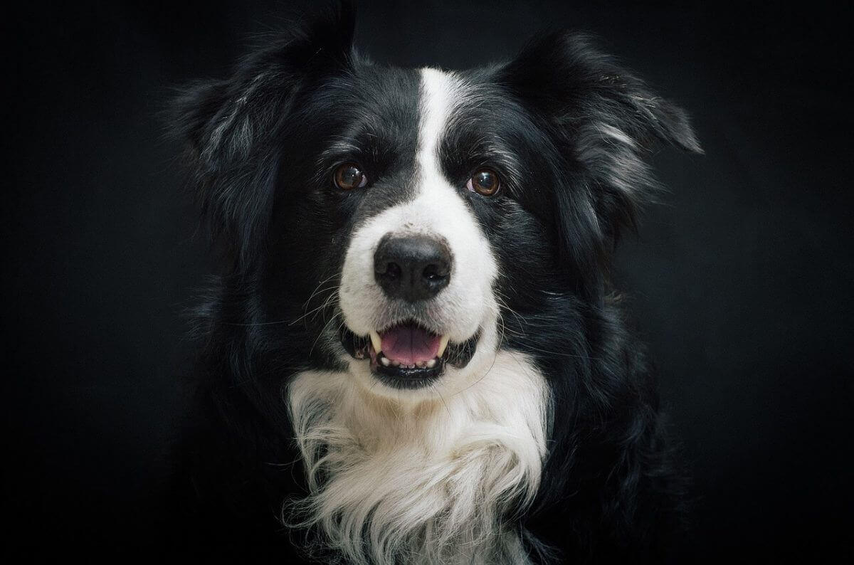 130 Black White Dog Names Pick A Name For Your Bicolor Dog