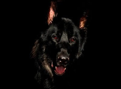200+ Black Dog Names – Perfect for All-Black Dogs and Dark Coats!