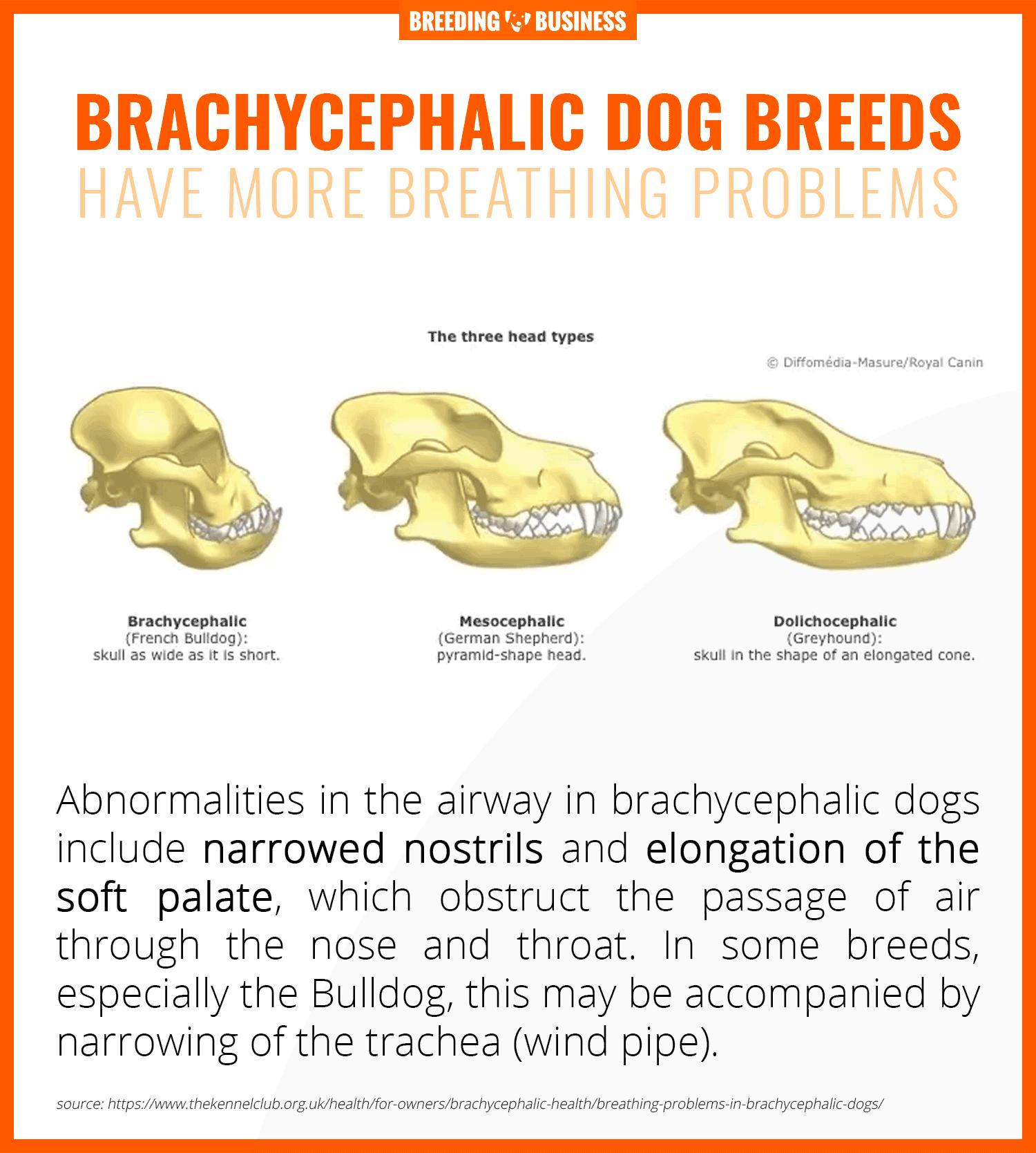 breathing problems in brachycephalic dogs
