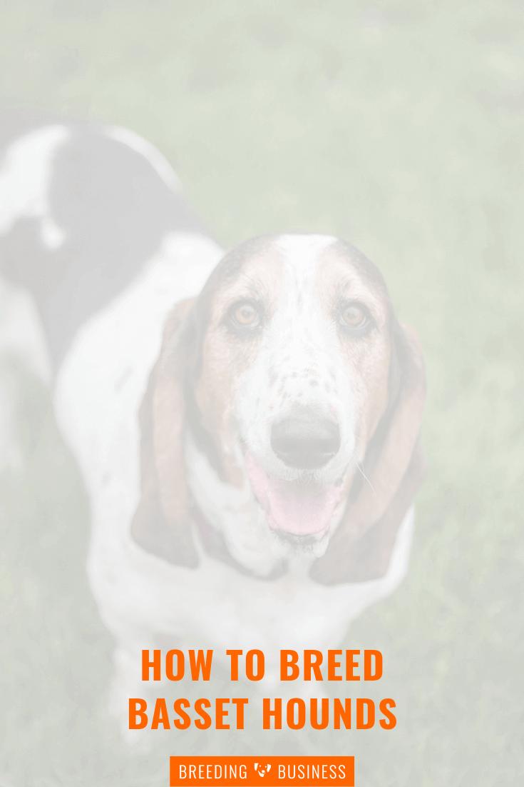 breeding basset hounds (poster)